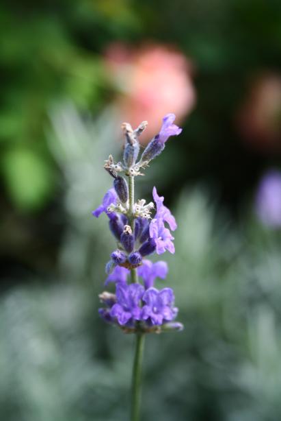 Blume (325k image)