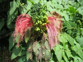 Flower2 (48k image)