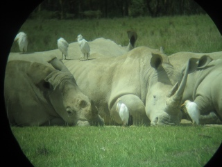 Rhino2 (41k image)